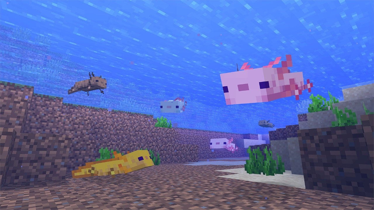 CC_anounce_Axolotl